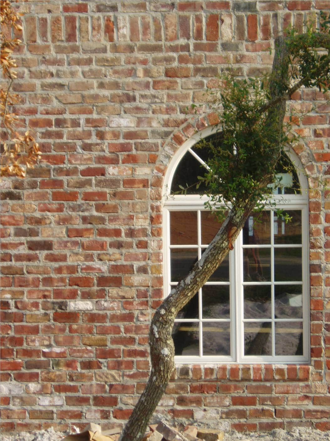 Old tuscany brick wall with a window and a tree branch infront.