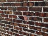 Tudor Clinkers | Close-Up Wall